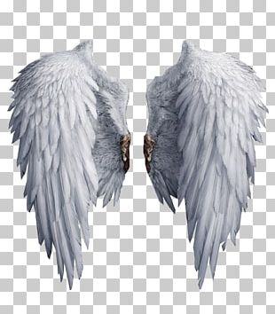 White Black White Wings PNG