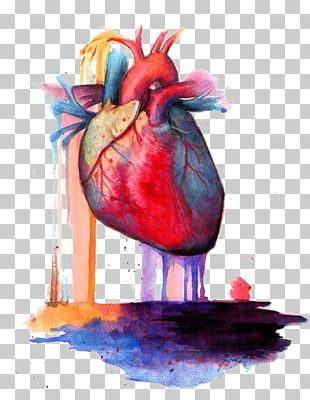 Heart Anatomy Watercolor Painting PNG