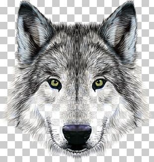Dog Arctic Wolf Mexican Wolf Illustration PNG