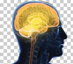 Central Nervous System Brain Outline Of The Human Nervous System Nerve PNG