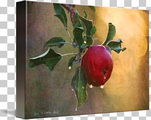 Still Life Photography Watercolor Painting Gallery Wrap Canvas PNG