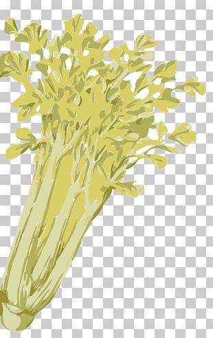 Celery Vegetable PNG
