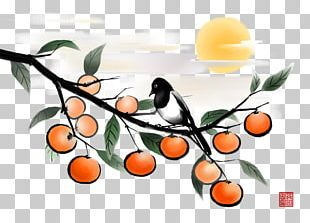 Fruit Japanese Persimmon Illustration PNG