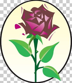 Rose Family Floral Design Cut Flowers PNG