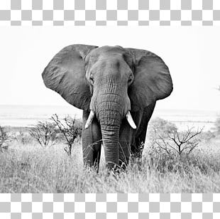 Elephant Safari Png Images Elephant Safari Clipart Free Download Download transparent elephant png for free on pngkey.com. imgbin com