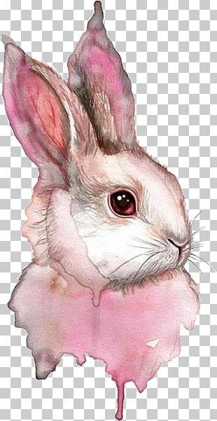 Watercolor Painting Rabbit Drawing PNG
