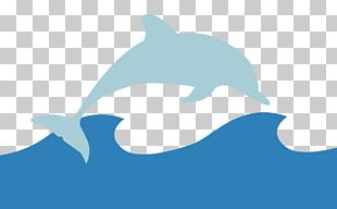 Common Bottlenose Dolphin Tucuxi Animal Polar Bear PNG