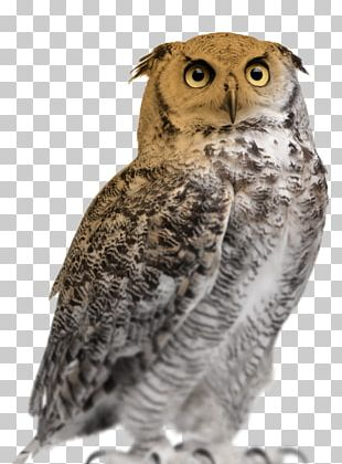 Great Horned Owl Eurasian Eagle-owl Stock Photography Snowy Owl PNG
