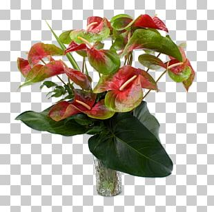 Anthurium Andraeanum Easter Lily Flower Rose Plant PNG