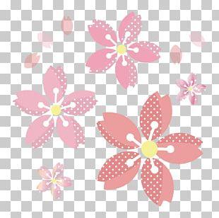 Cherry Blossom Floral Design Book Illustration Hanami PNG