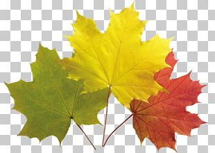 Autumn Leaf Color Autumn Leaves Maple Leaf PNG