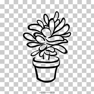 Black And White Succulent Plant Drawing PNG