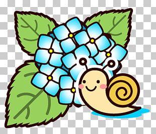 East Asian Rainy Season French Hydrangea June Nagasu Snail PNG