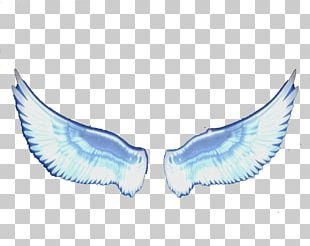Angel Wing Feather PNG