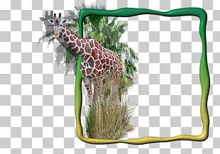 Giraffe Frames Digital Photo Frame PNG