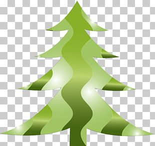 Fir Christmas Ornament Spruce Christmas Tree Evergreen PNG