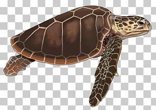 Loggerhead Sea Turtle Cheloniidae Tortoise Reptile PNG