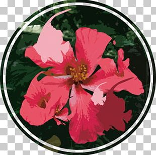 Rosemallows Rose Family Petal Punk Rock PNG