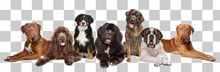 Dog Puppy Pet Sitting Cat Kennel PNG