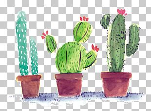 Cactaceae Poster PNG