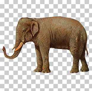 Elephant Illustration PNG