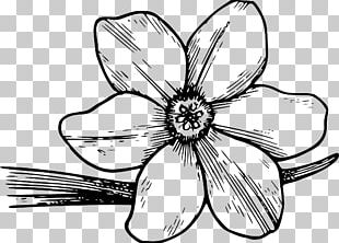Coloring Book Flower Colouring Pages Drawing PNG