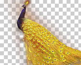 1+1=2 Golden App Android Application Package Peafowl PNG