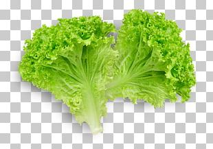 Butterhead Lettuce Lettuce Sandwich Romaine Lettuce Leaf Vegetable PNG