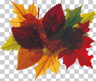 Autumn Leaf Euclidean PNG