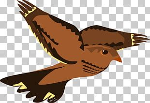 Hawk Bird Eagle Reptile Falcon PNG