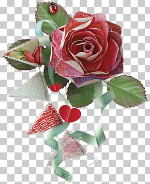 Cut Flowers Garden Roses Beach Rose PNG