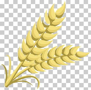 Grain Open Free Content Cereal PNG