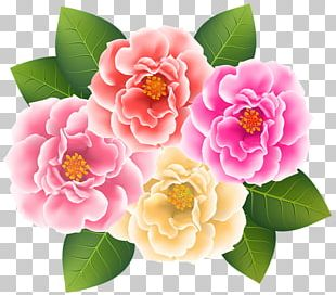 Japanese Camellia PNG