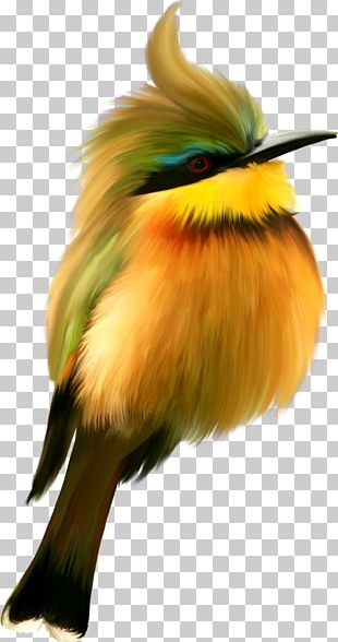 Bird Portable Network Graphics Adobe Photoshop PNG