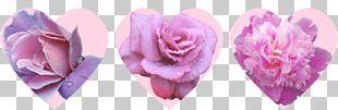 Cut Flowers Floristry Rose Family Petal PNG