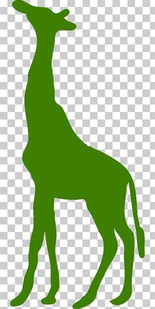 Giraffe Decal Sticker PNG