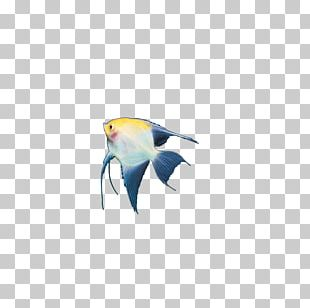 Marine Biology Marine Mammal Fin Fish Beak PNG