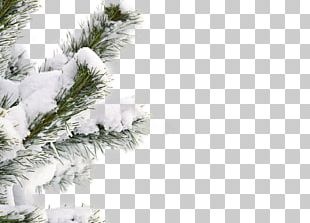 Snow Winter Tree Shutterstock PNG