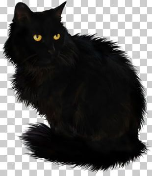 Black Cat Maine Coon Domestic Long-haired Cat Cymric Domestic Short-haired Cat PNG