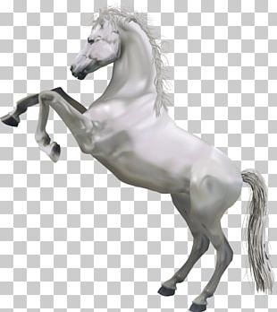 Horse White PNG