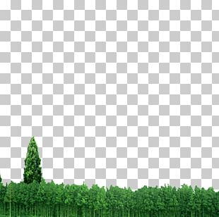 Forest Euclidean PNG