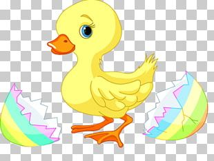 Duck Easter PNG