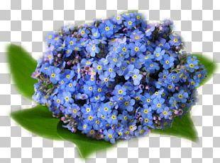 Scorpion Grasses Flower Bouquet Desktop Birthday PNG