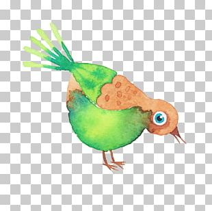 Bird Watercolor Painting Drawing PNG