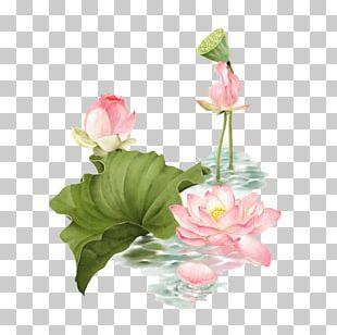 Lotus Pond Nelumbo Nucifera PNG