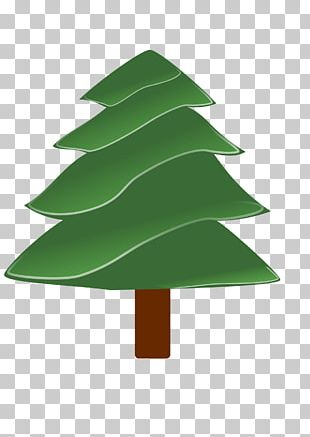 Evergreen Pine Tree PNG