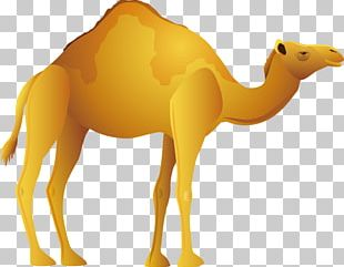 Bactrian Camel Desert Icon PNG