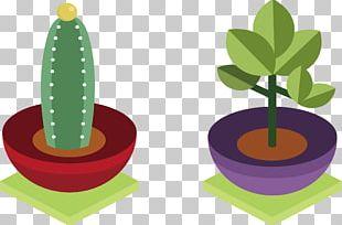 Cactaceae Plant Euclidean PNG