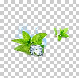 Water Mint Ice Cube Menthol PNG