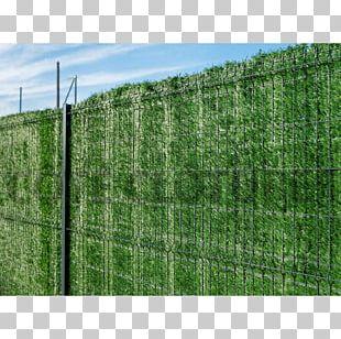 Hedge Chicken Wire Fence Trellis Garden PNG